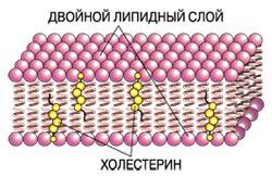 как действуют статины на организм