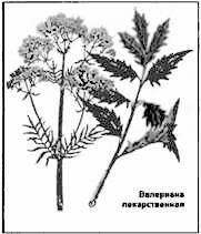 Травы-жизнедатели