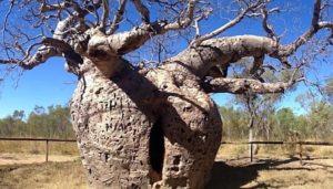 Срок жизни некоторых растений достигает тысячелетий.