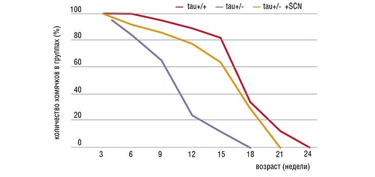 Мутации в гене tau - одном из часовых генов, работающих вклетках супрахиазматического ядра гипоталамуса, - влияют напродолжительность жизни хомячков