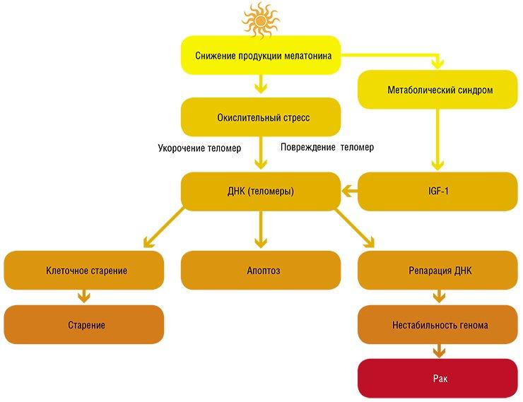 Дополнительное освещение посредством клеточных молекулярных механизмов может ускорять процессы старения и стимулировать образование опухолей